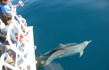 Spot dolphins on this Fraser Island cruise
