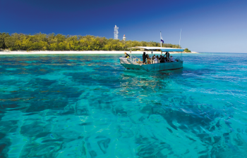 Experience nature at its best on a Lady Elliot Island Day Trip