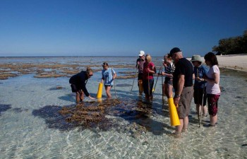 Lady Elliot Island Day Trip - Explore an Eco Resort and its surroundings