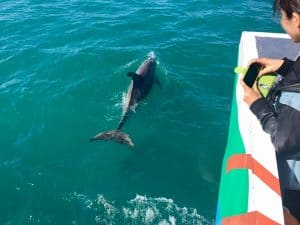 Spot dolphins and other marine life with Hervey Bay eco marine tours