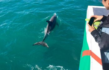 Spot dolphins and other marine life on this Hervey Bay eco marine tour