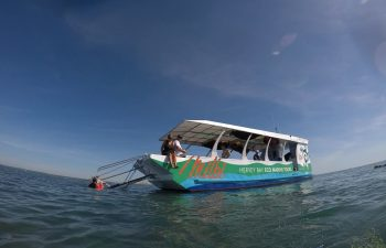 Enjoy a relaxed pace on this glass bottom boat experience with Hervey Bay Eco Marine Tours.