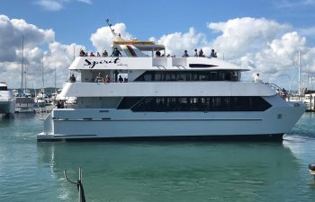 See the whales up close on the Spirit of Hervey Bay half day whale watching tour