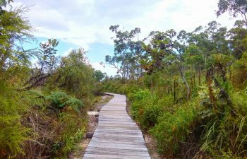 Stroll along decks walled with native flora at Kingfisher Bay Resort