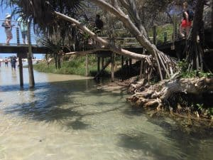 Creeks and rainforest aplenty on this Fraser Island tour