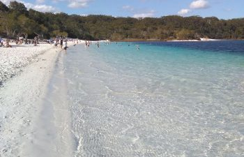 On this Fraser Island tour Visit the famous iridescent blue waters of Lake McKenzie on the world heritage listed Fraser Island.