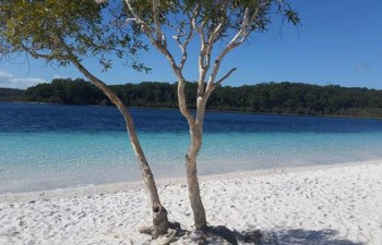 See the gorgeous Lake McKenzie on this awesome Fraser Island day tour