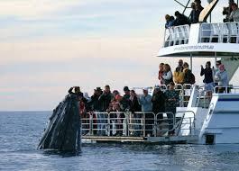 Tasman Venture whale watching cruise