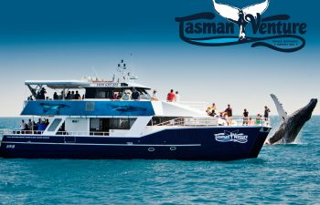 Tasman Venture whale watching in Hervey Bay