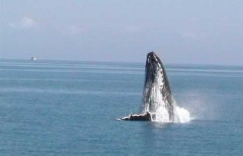 See the whales on the Quick Cat II Whale Watching tour