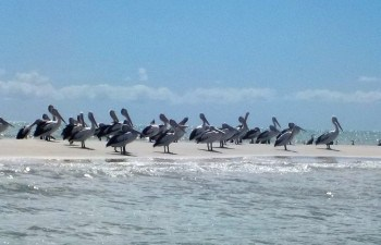 Explore and sight-see on Pelican Bank, an idylic sand island on this jet ski tour that departs from Hervey Bay