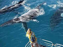 See the whales on Tasman Venture whale watching cruise