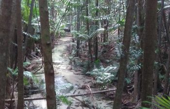 Gorgeous rainforest on this Fraser Island tour